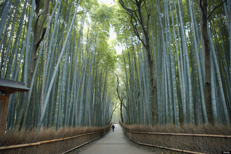 Bamboo Garden In Kyoto Japan 22 Epic Places You Didn't Know Existed | Huffpost