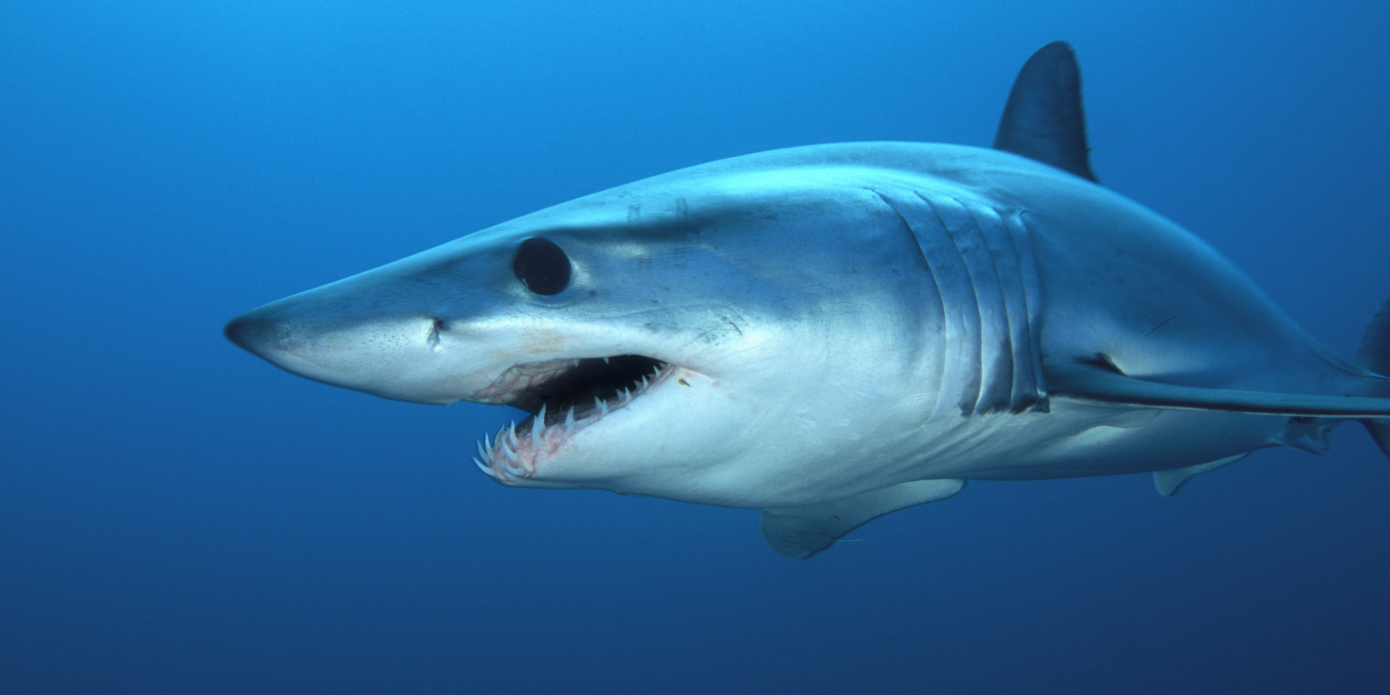 3d Animation Animals Wallpaper Florida Man Catches 800 Pound Shark Fries It Up Huffpost