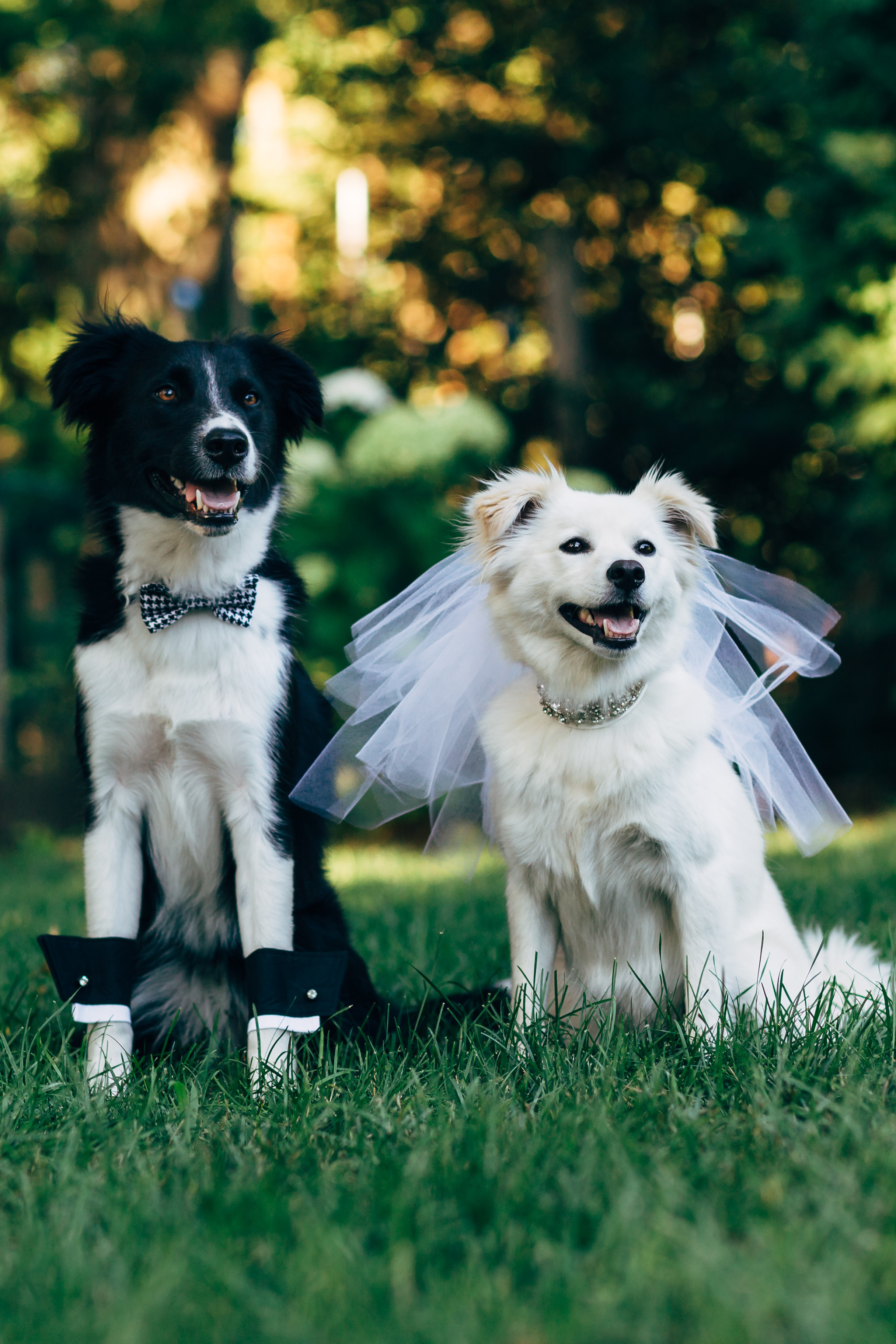 Cute Marriage Couple Wallpaper These Furry Friends Made Their Love Official In The Cutest