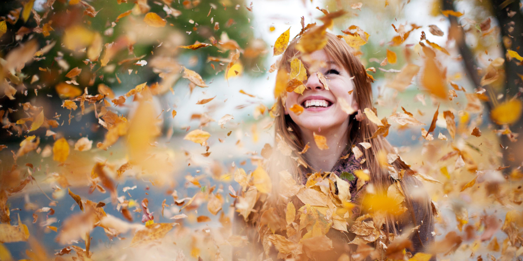 Fall Leaves Dancing Wallpaper Here S The Science Behind Why Leaves Change Color In The