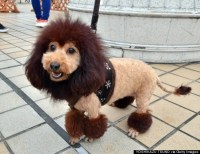 These 15 Geeky Dog Costumes Are Perfect For A Nerd's Best ...