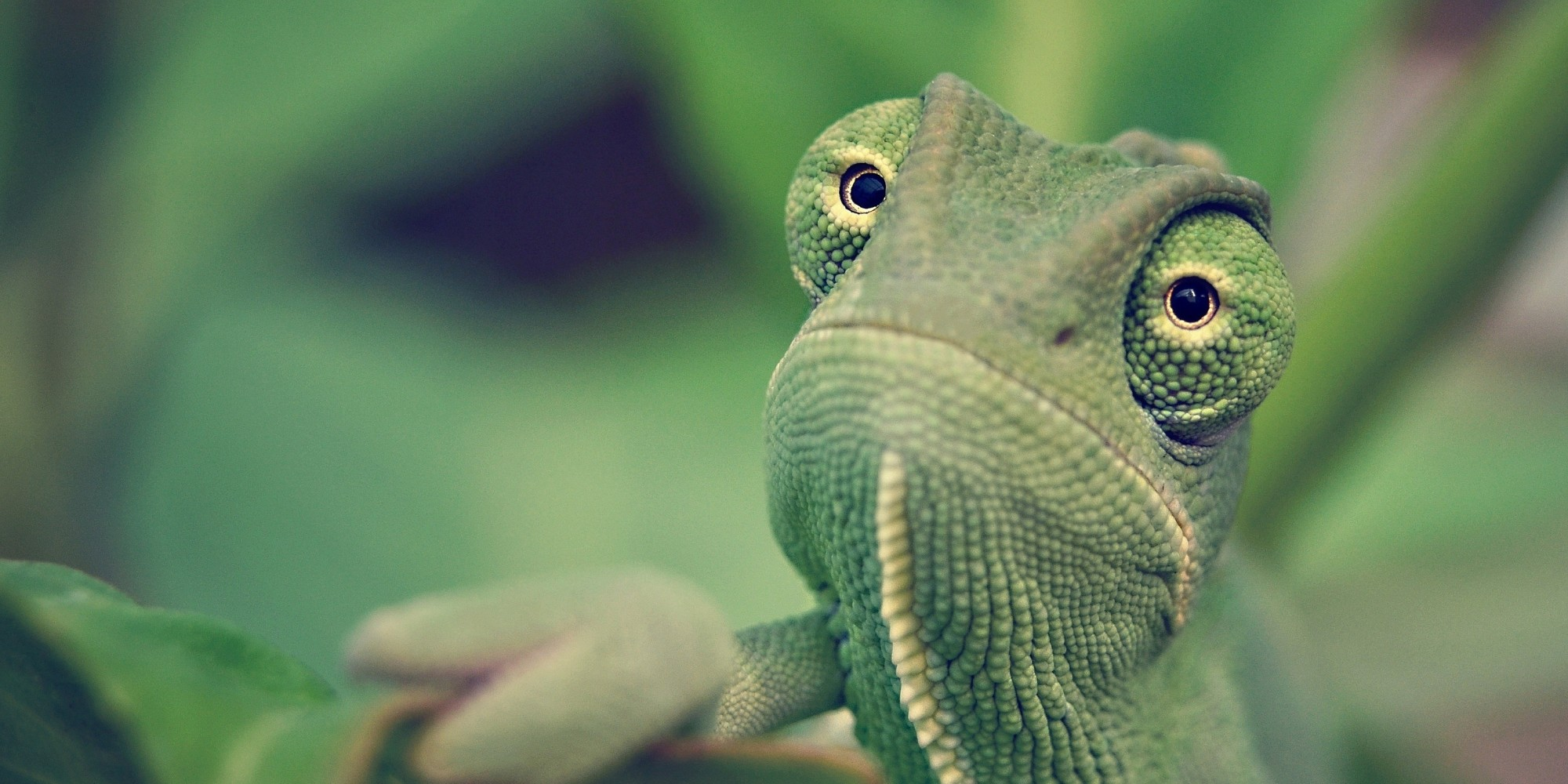 Cute Downloadable Wallpapers Image 9 Chameleon