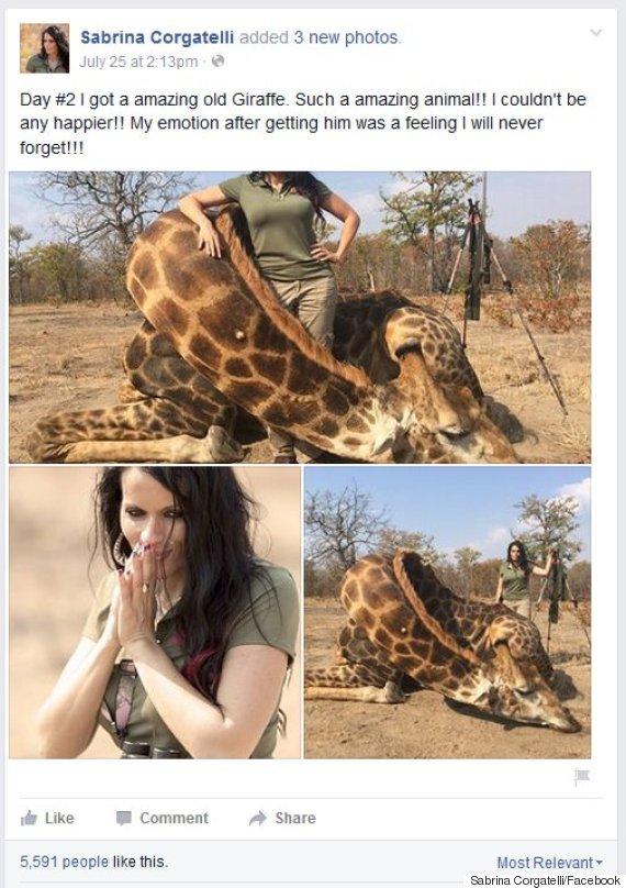 Lion Animal Wallpaper Sabrina Corgatelli Idaho Huntress Faces Outrage After
