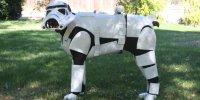 Doberman 'Star Wars' Costume Turns Pincher Into ...