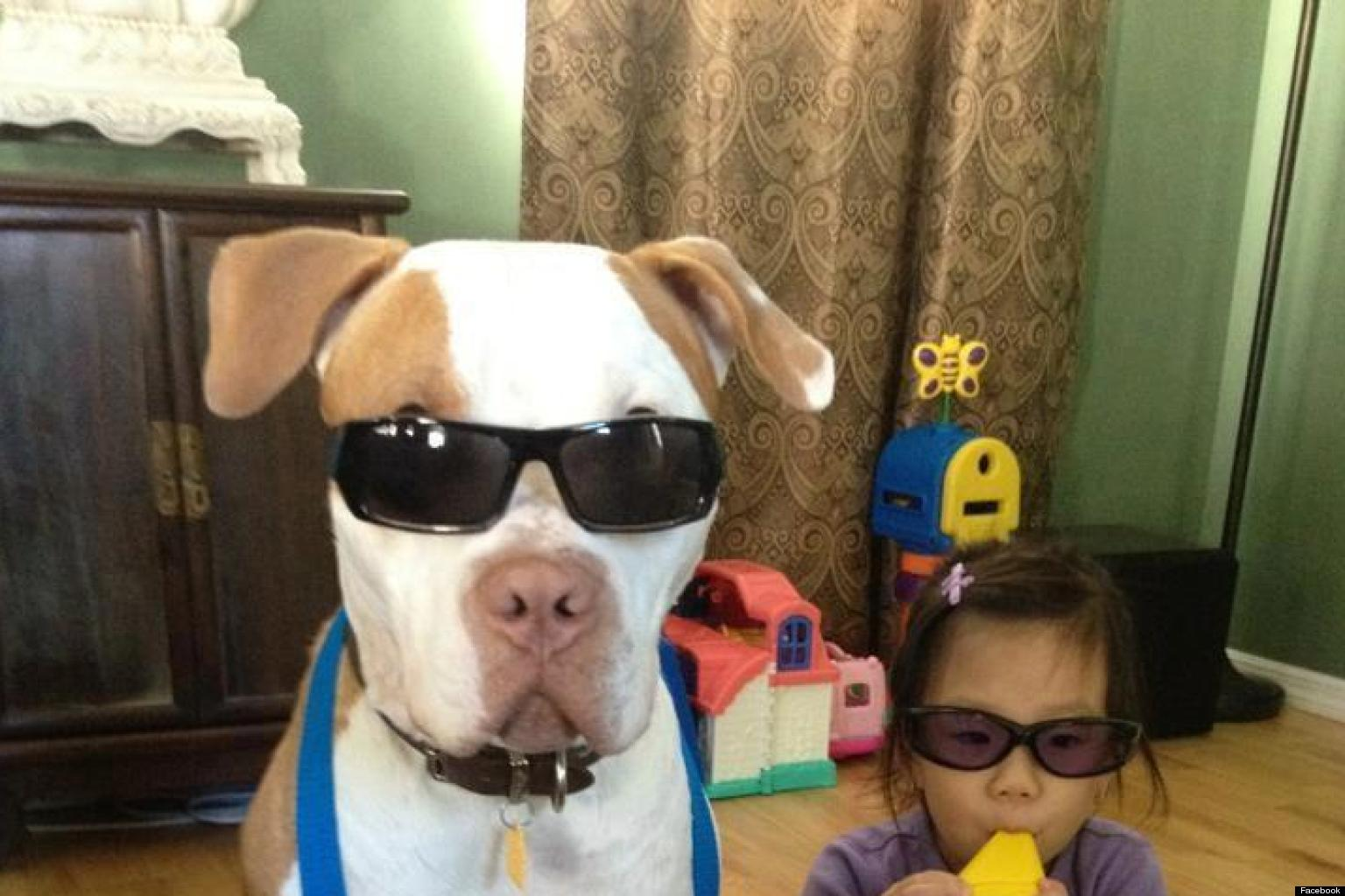 Dog Strollers In South Africa Dog And Baby Form Rock Band Photo Huffpost