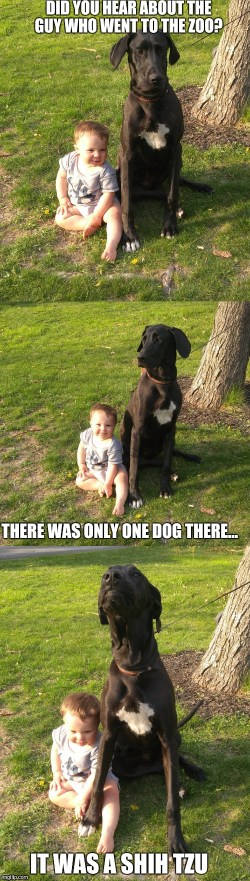 Small Of Bad Joke Dog