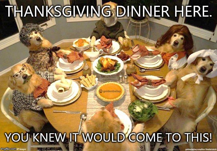 Dog Thanksgiving Imgflip