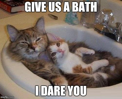 Cats In Sink Imgflip