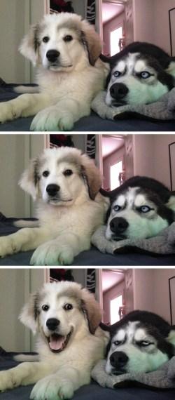 Decent Bad Pun Dogs Meme Template Meme Template Search Imgflip Dog Dad Joke Meme Dog Joke Meme Blank