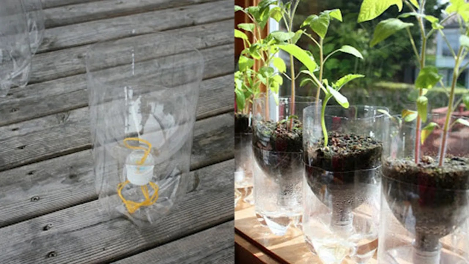 Make Self Watering Planters Turn A Soda Bottle Into A Worry Free Self Watering Planter