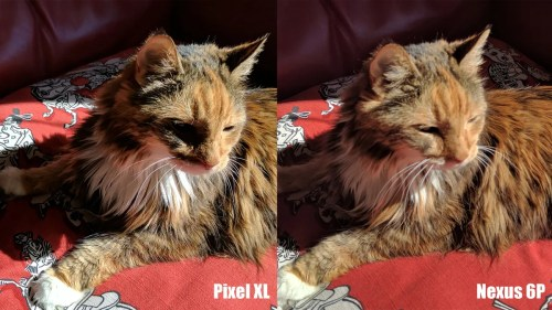 Medium Of Nexus 6p Vs Pixel