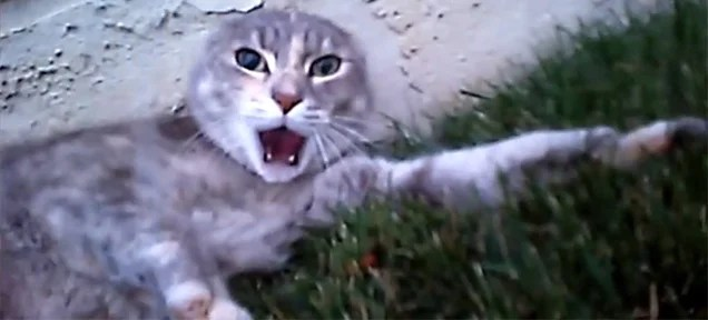 Video of a cat fight as seen from the perspective of one of the cats