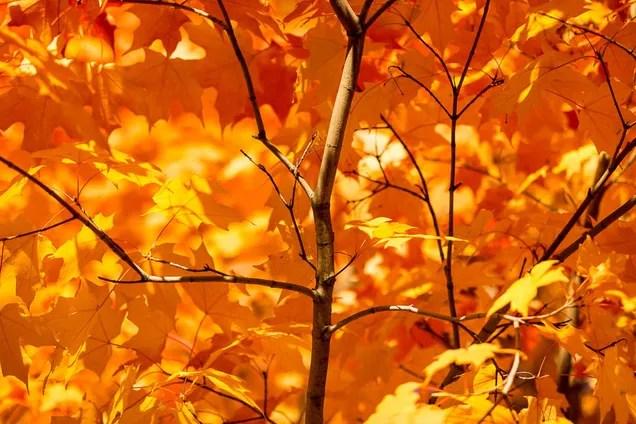 Galaxy S4 Fall Wallpaper 76 Stunning Photos Of Fall Leaves