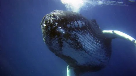 Multiple Calendars Google Japan Time And Date Japans Scientific Whaling Program Sucks