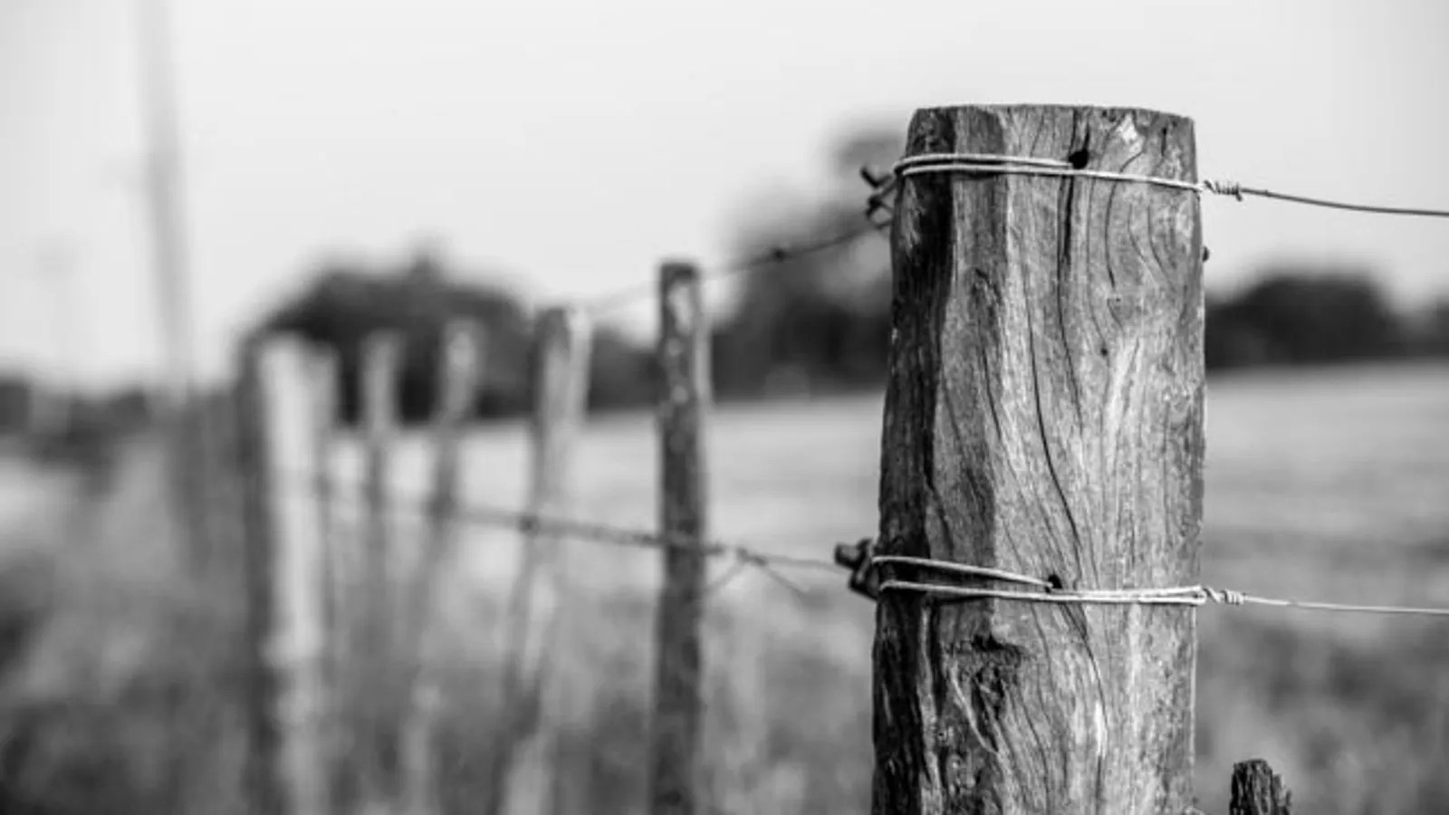 Wire Fencing Barbed Wire Fences Were An Early Diy Telephone Network