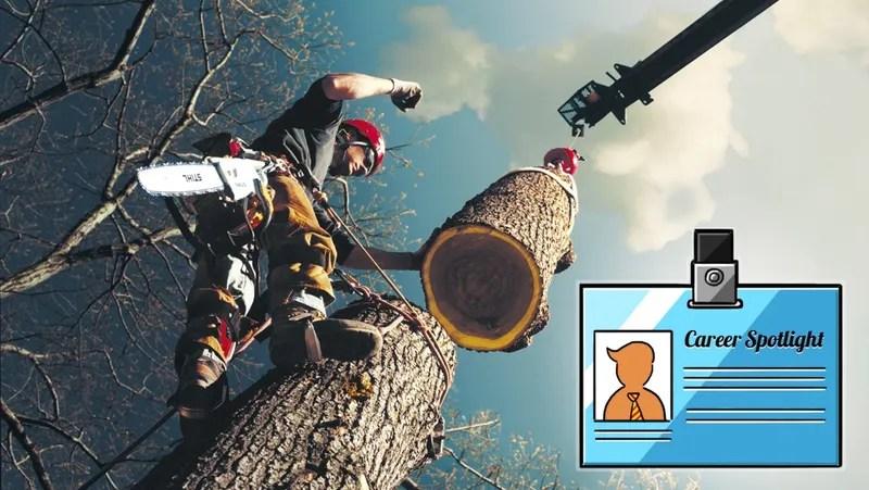 Career Spotlight What I Do As An Arborist