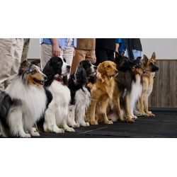 Small Crop Of Dog Breed Identification Quiz