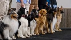 Small Of Dog Breed Identification Quiz