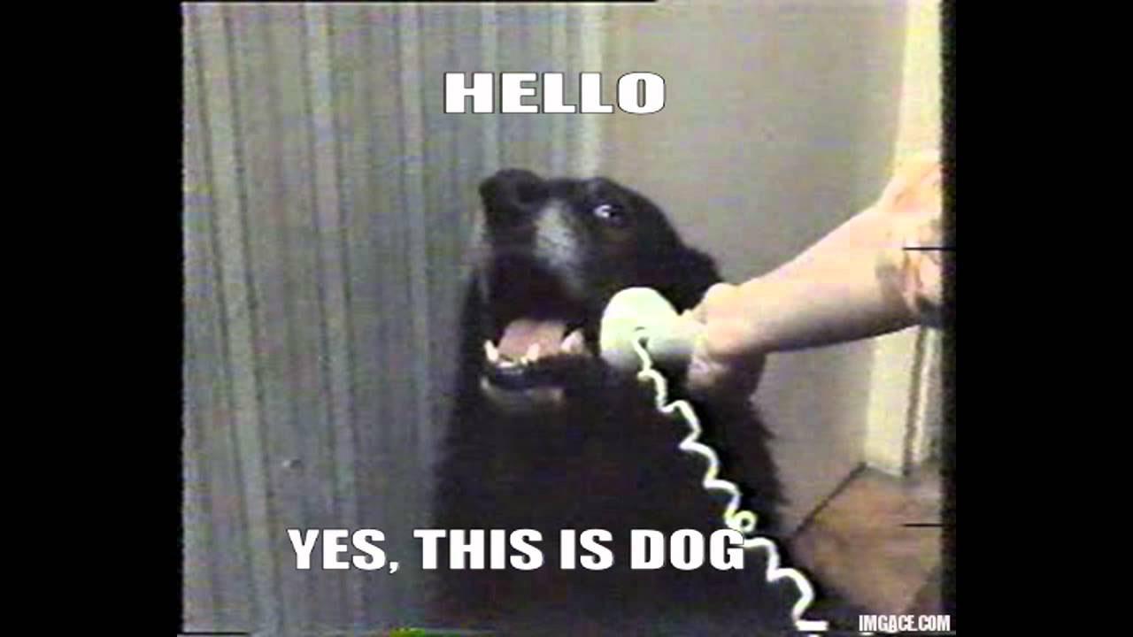 Prissy This Is Dog This Is Dog Know Your Meme Sad Puppy Dog Face Meme Ny Sad Dog Memes bark post Sad Dog Meme