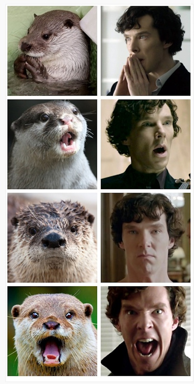 Gray Sherlock Holmes Benedict Cumberbatch Otter Sherlock Facial Expressionmammal Fauna Snout Image Sherlock Know Your Meme Benedict Cumberbatch Meme Loch Ness Benedict Cumberbatch Memes bark post Benedict Cumberbatch Meme