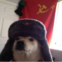 Small Crop Of Dog In Russian