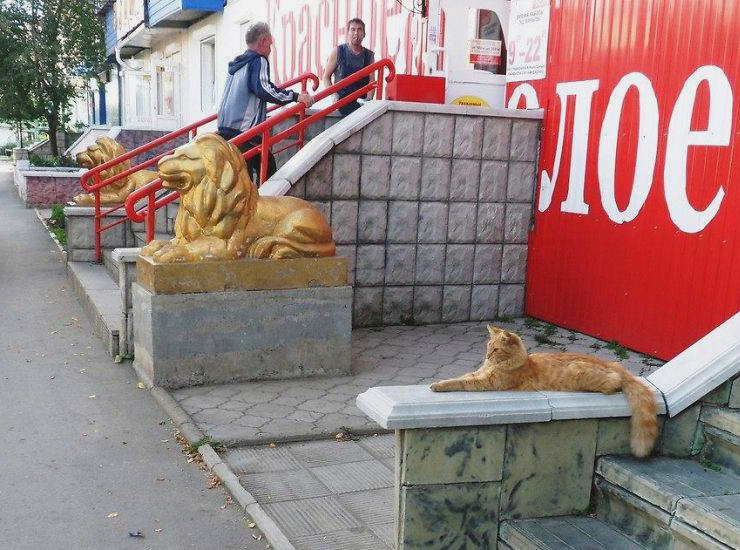 When you lie on your resume but you still get the job Cats Know
