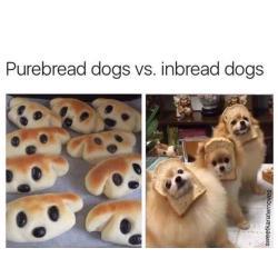 Small Crop Of Happy Dog Meme