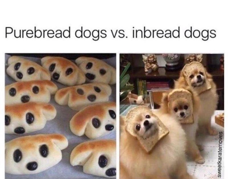 Large Of Happy Dog Meme