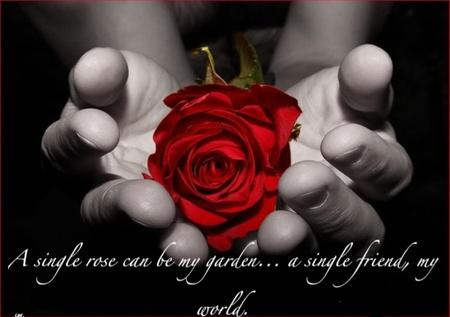 Fantasy Angel Girl Wallpaper A Single Rose Can Be My Garden A Single Friend My