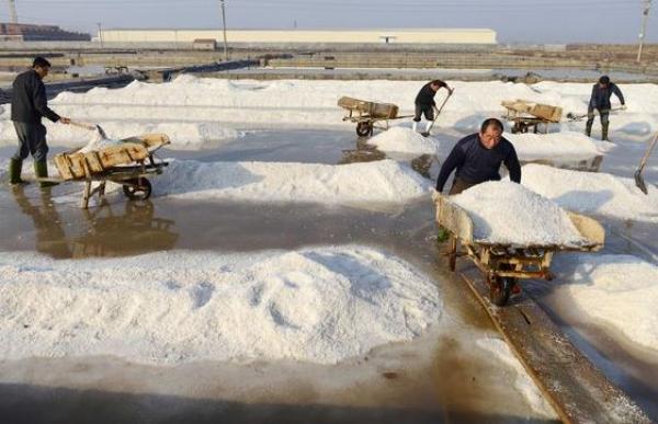 Image result for salt factory