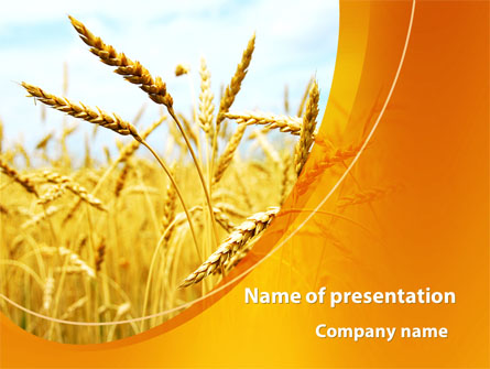 Golden Ear Of The Wheat Presentation Template for PowerPoint and - wheat template
