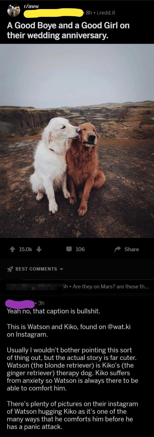Medium Of We Dont Deserve Dogs
