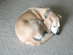 Small Of Jack Russell Lab Mix
