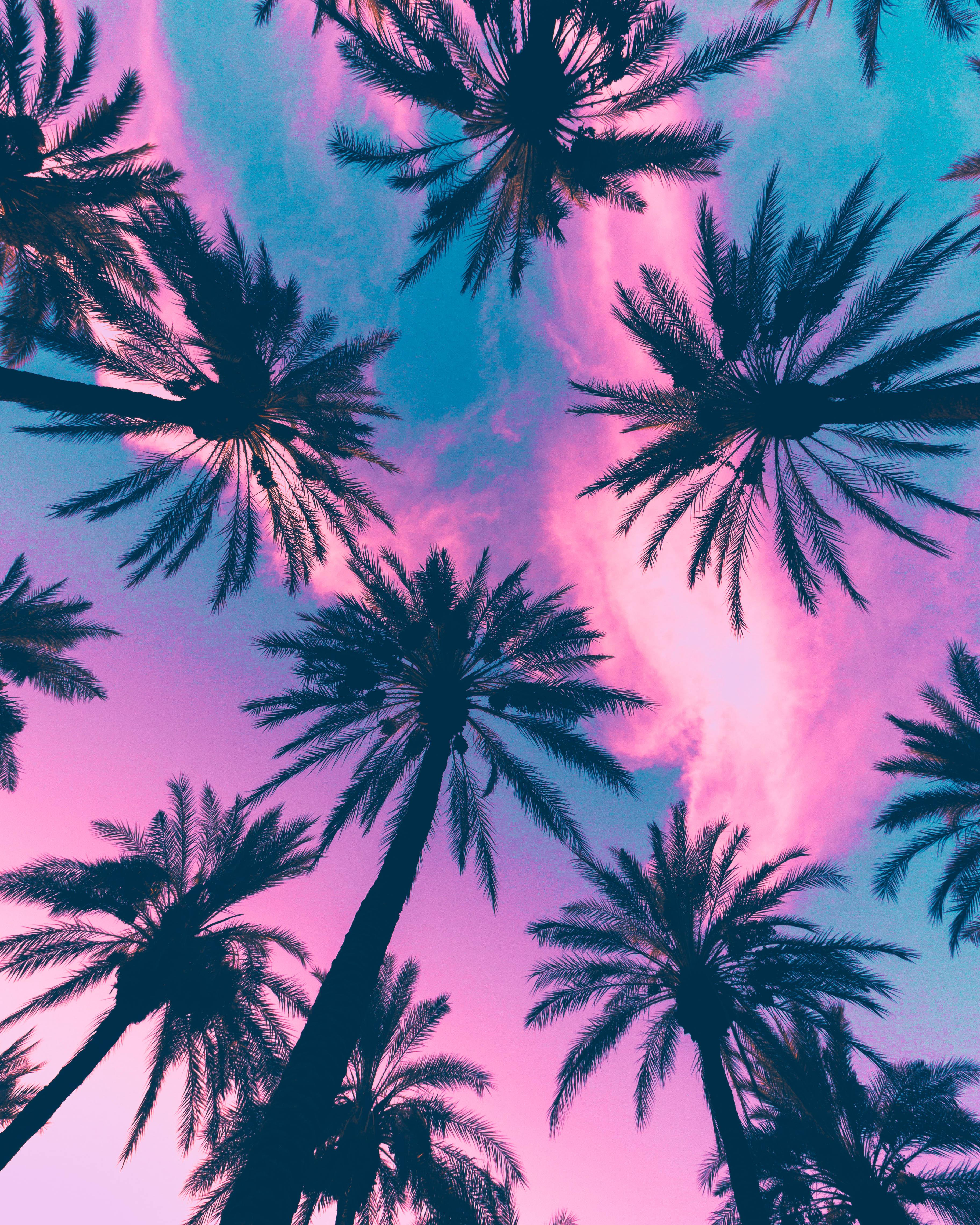 3d Blossoms Live Wallpaper Itap Of Some Palm Trees Itookapicture