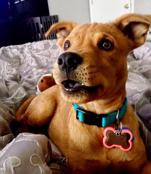 Medium Of What Kind Of Dog Is Scooby Doo