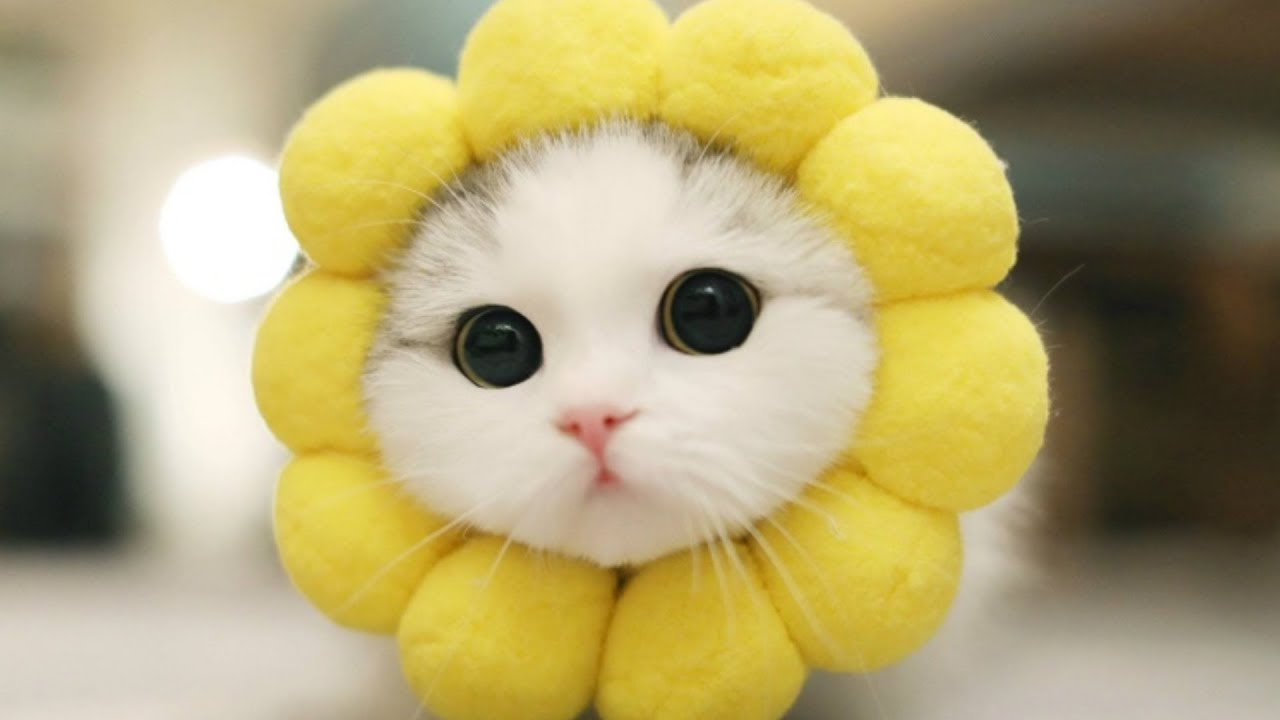 Baby Cat Cute Live Wallpaper 50 50 A Cute Baby Cat With Flower Costume Sfw