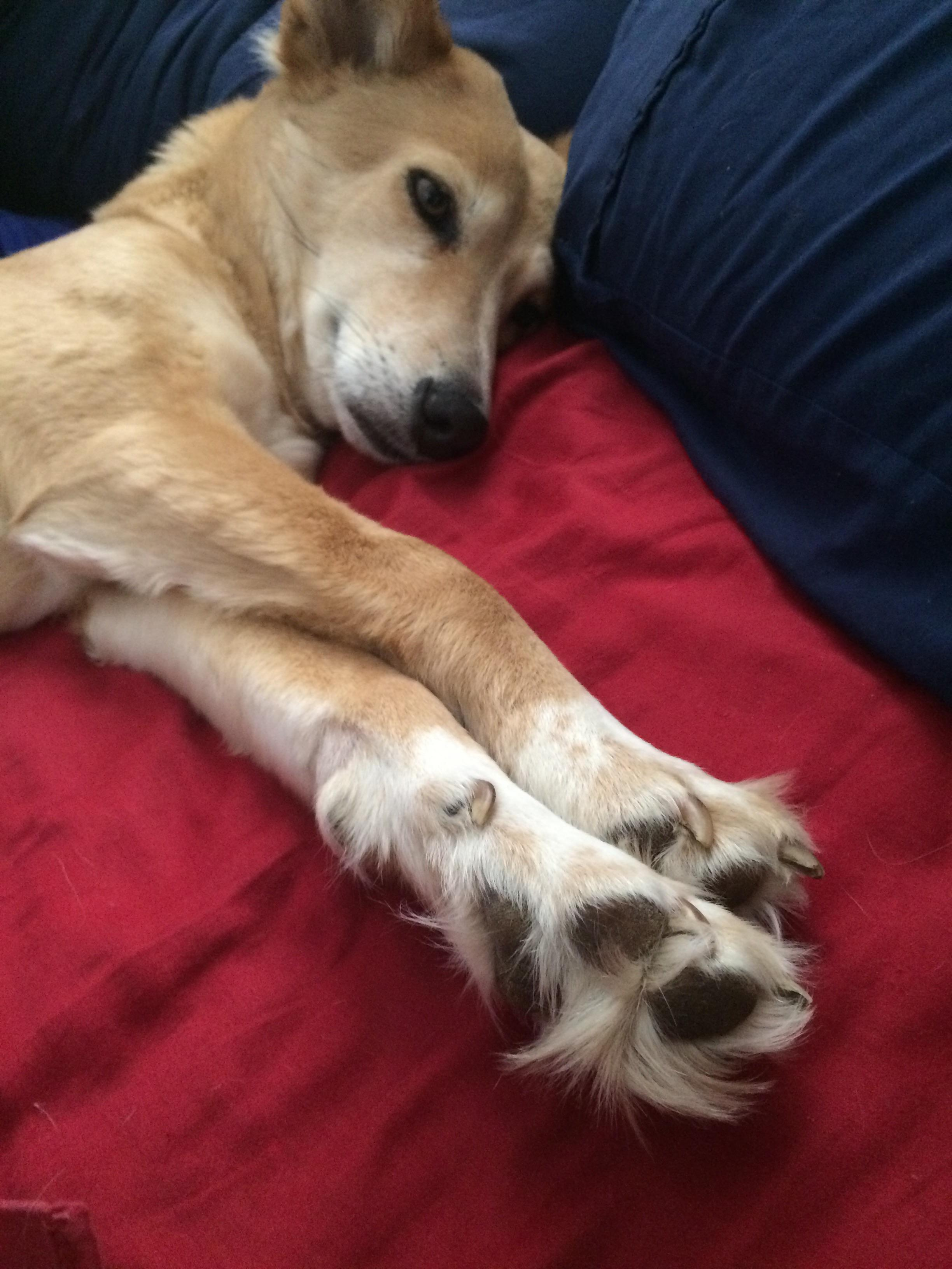 Sleek My Dog Has Really Long Fur Between Her My Dog Has Really Long Fur Between Her Doggos How Many Toes Does A Dog Have On Back Legs How Many Toes Does A Dog Have Quiz bark post How Many Toes Does A Dog Have