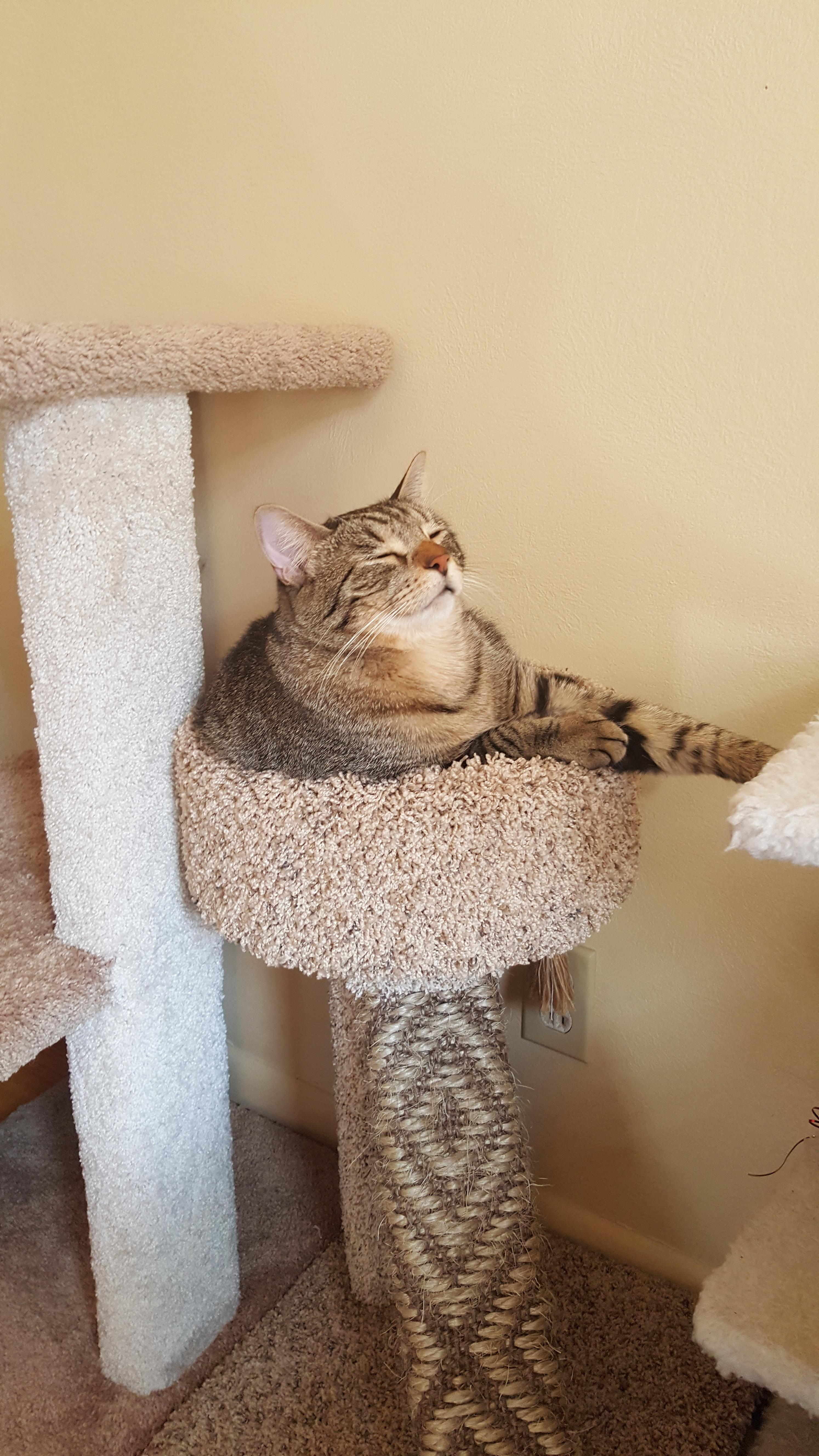 Pretty Cat Furniture Sitting Pretty In His New Scratching Post Aww