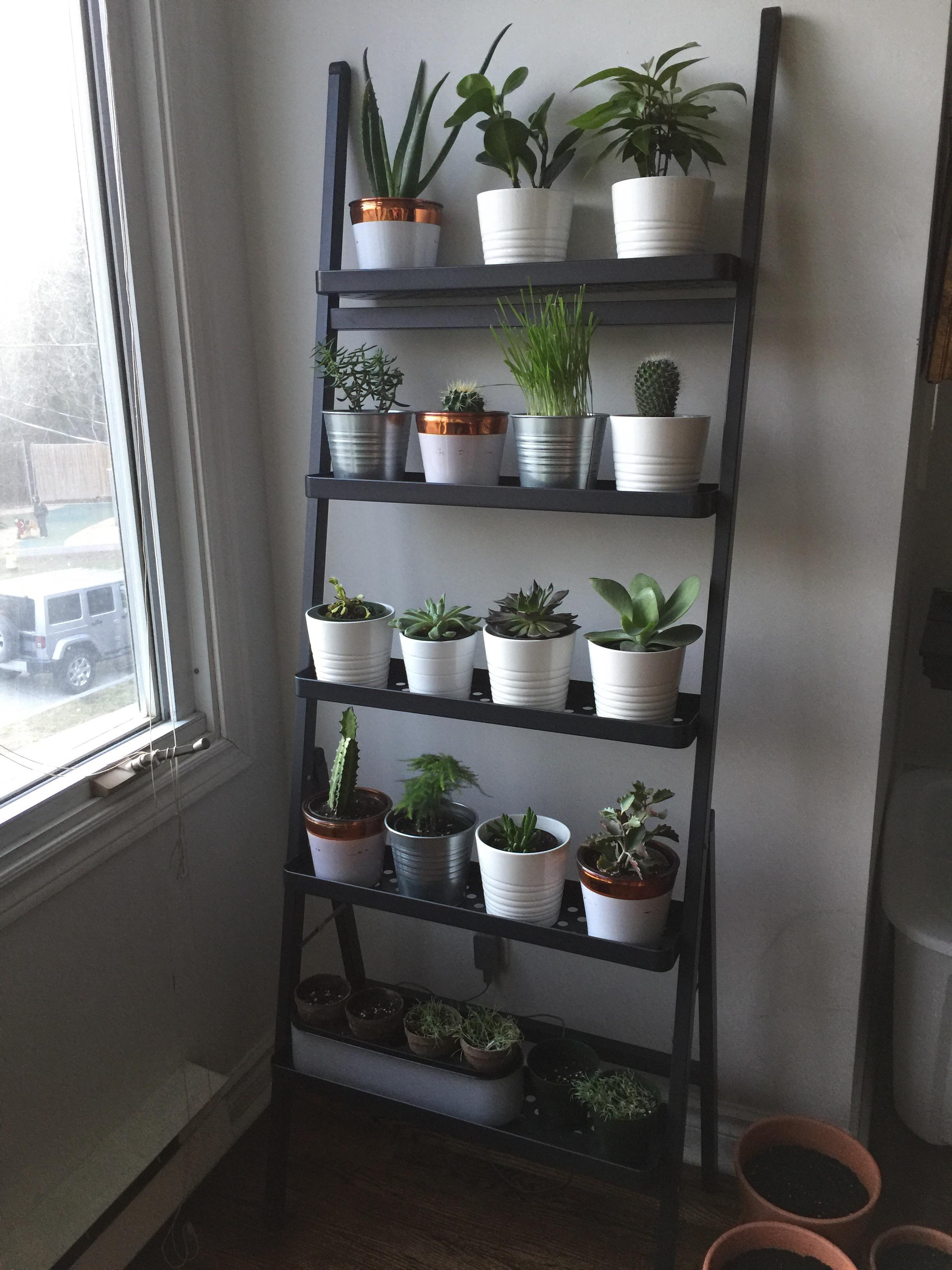 Indoor Wall Mounted Plant Holders Updated Indoor Plant Stand Send Help Indoorgarden