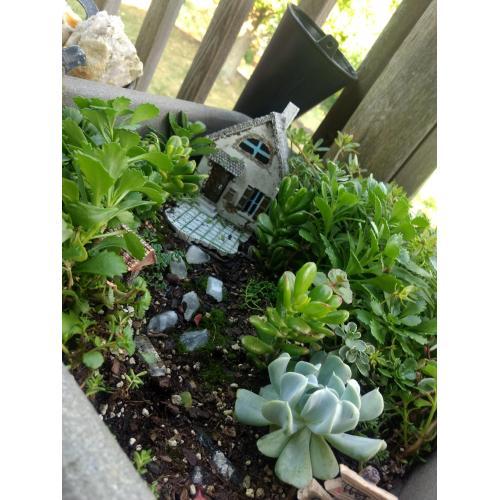 Medium Crop Of Succulent Fairy Gardens