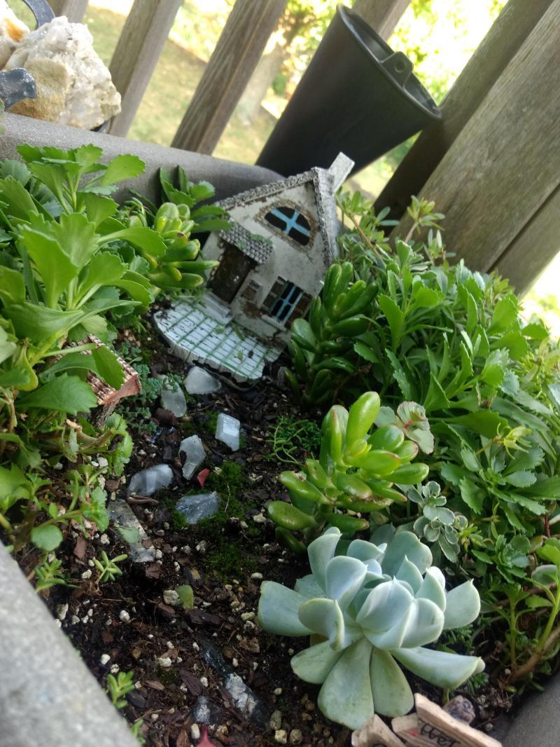 Large Of Succulent Fairy Gardens