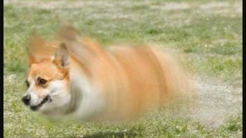 Medium Of Fastest Dog In The World