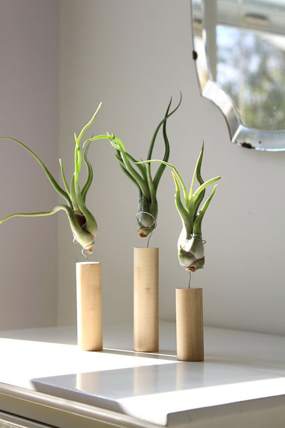 Ikea Kallax 27 Coolest Ways To Display Air Plants - Shelterness