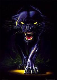 Black Panther Animal Wallpaper Panthere Asse 176 Le Blog Ki Tu C Ici Lool 176