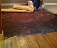 flooring - How can I remove carpet adhesive from hardwood ...