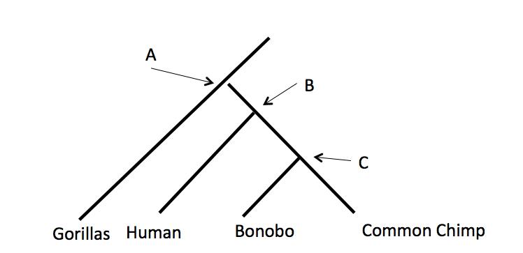 matter tree diagram