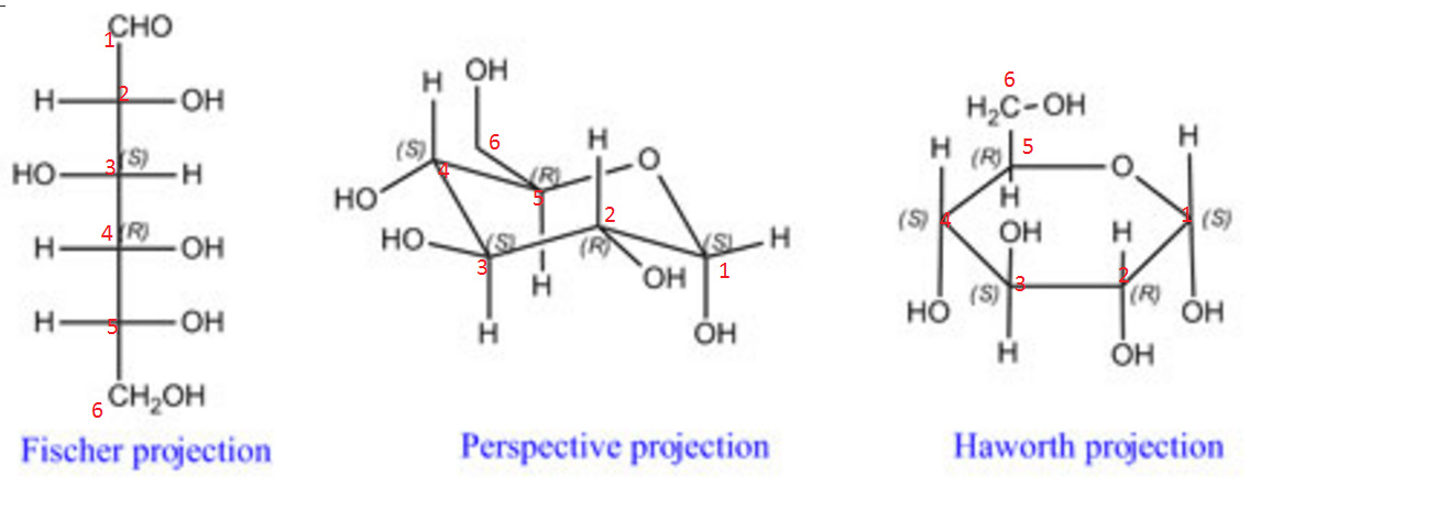 Carbohydrates Haworth Fischer Projections With Chair