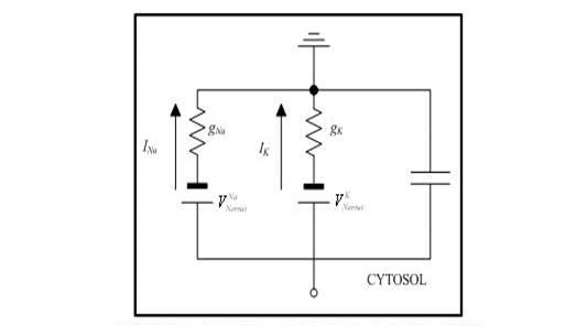 electronic circuit neuron