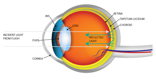 owl eye diagram