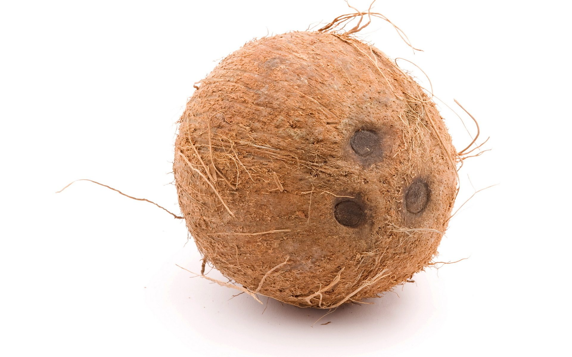 Evolution Why Does A Coconut Have Exactly Three Quotholes